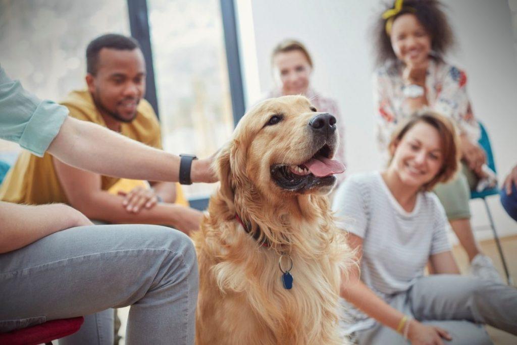 5 Beneficios de tener un perro para tu salud mental - Pinna the corgi